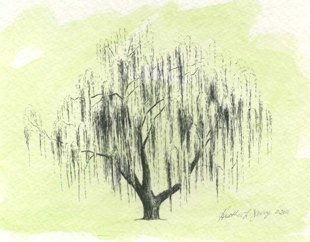 weeping-willow-tree-sketch-i8